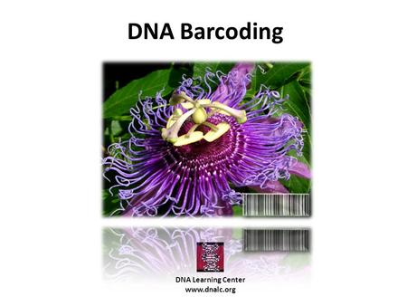 DNA Barcoding DNA Learning Center www.dnalc.org. What is DNA barcoding and why is there a need for it?