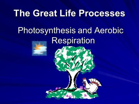 The Great Life Processes Photosynthesis and Aerobic Respiration.