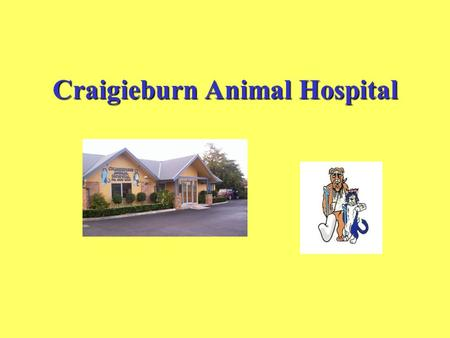 Craigieburn Animal Hospital. Dog and Cat Dental Health.
