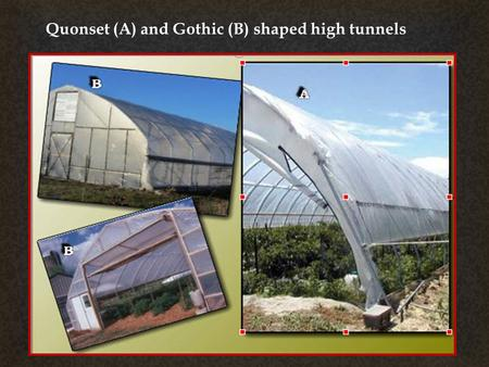  Quonset (A) and Gothic (B) shaped high tunnels.