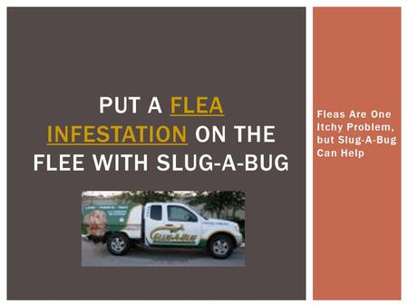 Fleas Are One Itchy Problem, but Slug-A-Bug Can Help PUT A FLEA INFESTATION ON THE FLEE WITH SLUG-A-BUGFLEA INFESTATION.