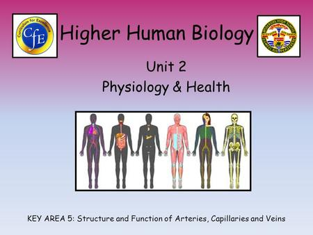 Higher Human Biology Unit 2 Physiology & Health KEY AREA 5: Structure and Function of Arteries, Capillaries and Veins.