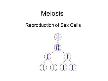 Meiosis Reproduction of Sex Cells. Meiosis Introduction Meiosis is part of the life-cycle of every organism that reproduces sexually. Meiosis is cell.