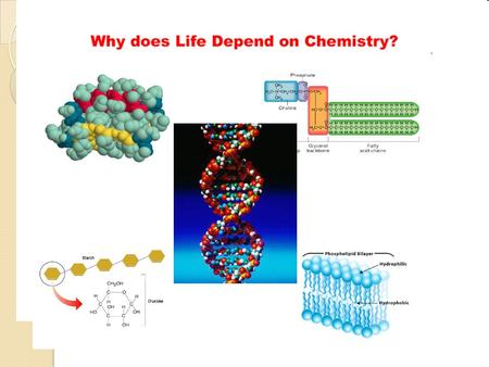 Chapter 2 - The Chemistry of Life I. The Nature of Matter A. Atoms - made of p+, e-, no B. Elements and Isotopes - - Element has only one type of atom,