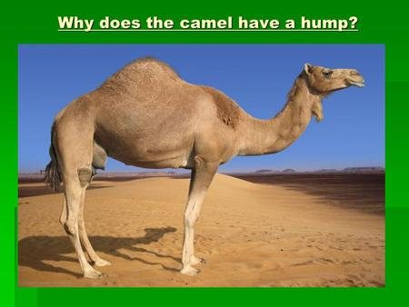 Why does the camel have a hump?. Biological Molecules: Lipids  Links to G.C.S.E  Bonding  Balanced diet and food tests  Hormones  Respiration.