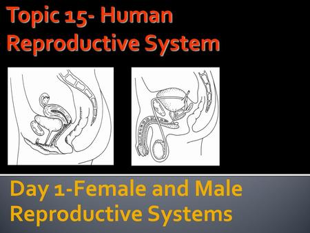 Day 1-Female and Male Reproductive Systems. 1. Grab a Biology EOC Exam Preparation Bell Ringer 2. Provide a GIST of the Question. 3. Bubble your answer.