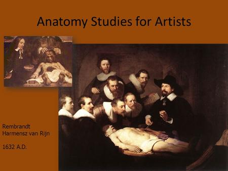 Anatomy Studies for Artists Rembrandt Harmensz van Rijn 1632 A.D.