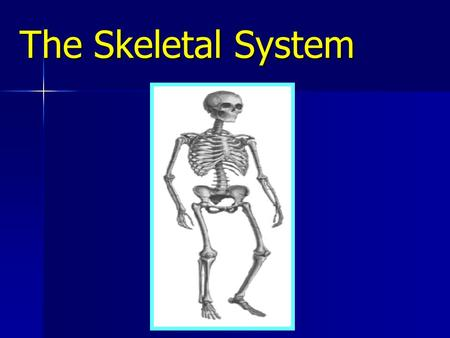 The Skeletal System. Objectives Describe the structure & functions of the skeletal system. Describe the structure & functions of the skeletal system.