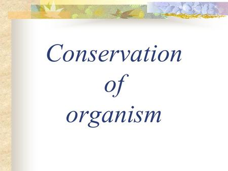 Conservation of organism. Introduction Nowadays, people are more and more concern about conservation of both environment and organisms. It is because.