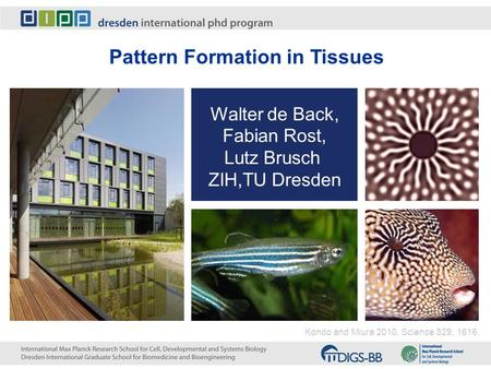 Pattern Formation in Tissues Walter de Back, Fabian Rost, Lutz Brusch ZIH,TU Dresden Kondo and Miura 2010, Science 329, 1616.