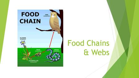 Food Chains & Webs. Producers  Organisms that make their own food by the process of photosynthesis  Also referred to as autotrophs (self-feeders) 