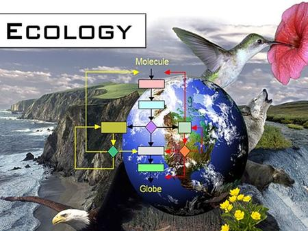 What is Ecology? The study of the ________________ between organisms and their environment interactions.