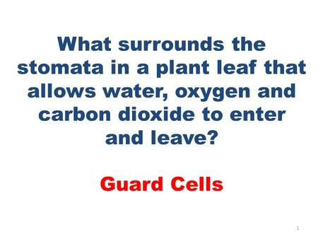 What surrounds the stomata in a plant leaf that allows water, oxygen and carbon dioxide to enter and leave? Guard Cells 1.
