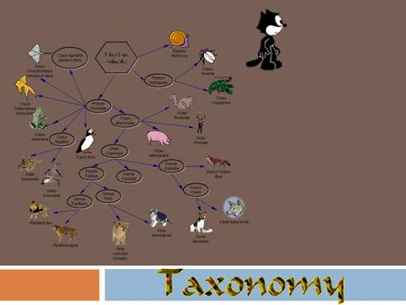 Phylogeny phylogeny: history of the evolution of organisms