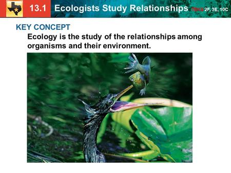 13.1 Ecologists Study Relationships TEKS 2F, 3E, 10C KEY CONCEPT Ecology is the study of the relationships among organisms and their environment.