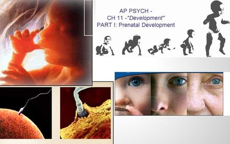 AP PSYCH - CH 11 -Development PART I: Prenatal Development.