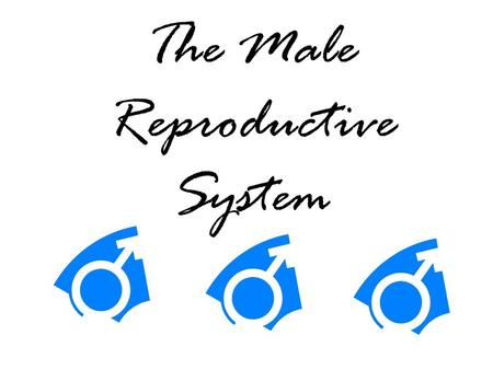 The Male Reproductive System. Define the function of the male reproductive system Produce sperm Secretions of the semen.