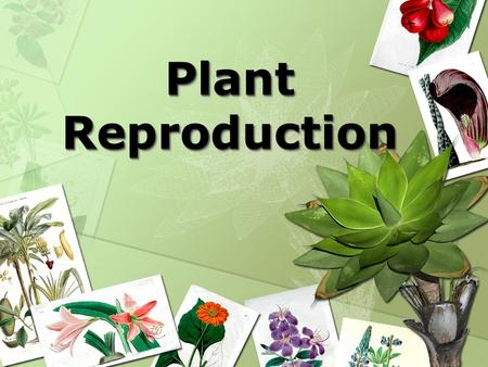 Plant Reproduction. FernsFerns Fern Reproduction The reproduction process of a fern requires moisture. As a result, they can only reproduce where there.