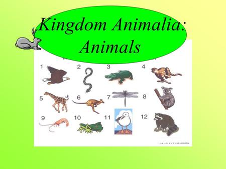 Kingdom Animalia: Animals. What makes it an animal? Multicellular Eukaryotic Heterotrophic No cell wall Have complex organs and systems Can move at some.