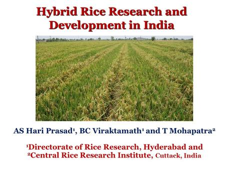 Hybrid Rice Research and Development in India AS Hari Prasad 1, BC Viraktamath 1 and T Mohapatra 2 1 Directorate of Rice Research, Hyderabad and 2 Central.