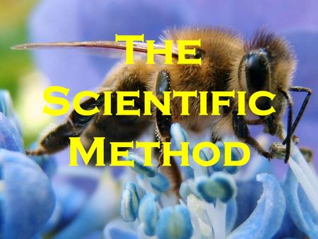 The Scientific Method. Recipe for Bees About 2000 years ago, a roman poet wrote these directions for producing bees: 1.Kill a bull during the first thaw.