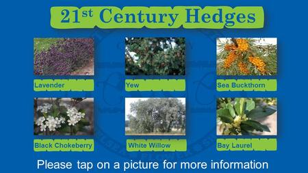 Please tap on a picture for more information Lavender 21 st Century Hedges YewSea Buckthorn Black ChokeberryBay LaurelWhite Willow.