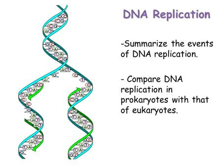 DNA Replication - -Summarize the events of DNA replication. - Compare DNA replication in prokaryotes with that of eukaryotes.