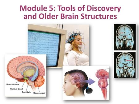 Module 5: Tools of Discovery and Older Brain Structures.