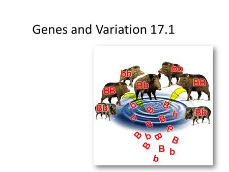 Genes and Variation 17.1. Genotypes and phenotypes in evolution Natural selection acts on phenotypes and does not directly on genes. Natural selection.