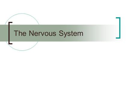 The Nervous System. Central Nervous System (CNS) – brain and spinal cord Peripheral Nervous System (PNS) – nerves that communicate to the rest of the.