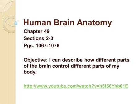 Human Brain Anatomy Chapter 49 Sections 2-3 Pgs. 1067-1076 Objective: I can describe how different parts of the brain control different parts of my body.