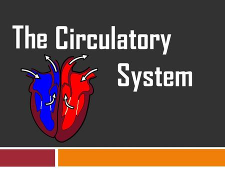 The Circulatory System. The Circulatory System transports oxygen and nutrients throughout the entire body and carries away carbon dioxide and waste materials.