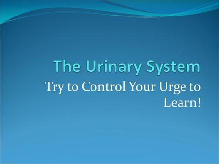 Try to Control Your Urge to Learn!. Organs of the Urinary System.