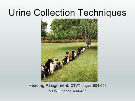 Urine Collection Techniques Reading Assignment: CTVT pages 604-609 &DRG pages 434-436 & DRG pages 434-436.