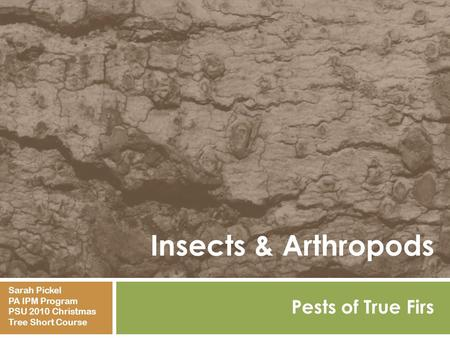 Insects & Arthropods Pests of True Firs Sarah Pickel PA IPM Program