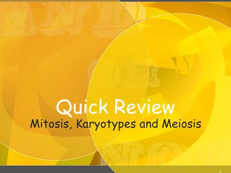 Quick Review Mitosis, Karyotypes and Meiosis 1. Meiosis KM2 Karyotyping.