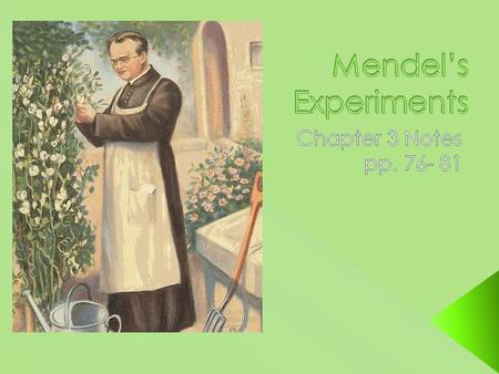  Gregor Mendel was a priest from the mid 19 th century who conducted experiments with pea plants in his garden.
