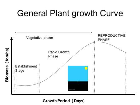General Plant growth Curve Establishment Stage Rapid Growth Phase REPRODUCTIVE PHASE Vegetative phase Growth Period ( Days) Biomass ( ton/ha)
