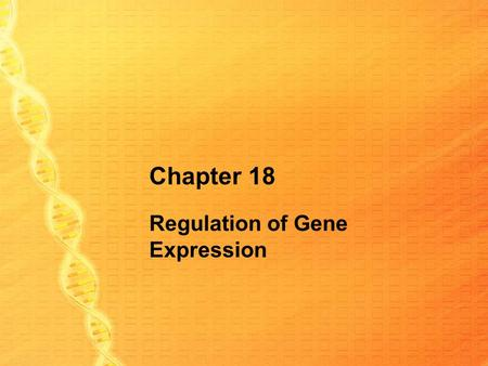 Chapter 18 Regulation of Gene Expression. Classify these things as occurring in prokaryotes, eukaryotes, or both. Single loop of DNA Chromosomes wound.