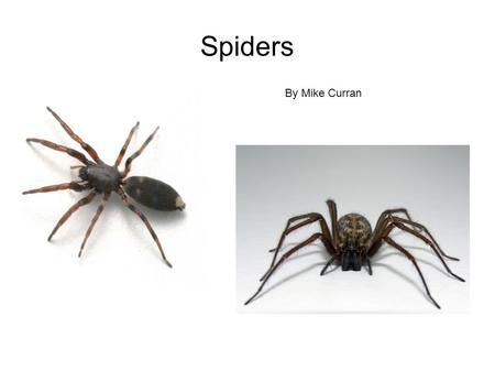 Spiders By Mike Curran. If you think spiders are gross and scary your way wrong. I find them really interesting. So check out this.