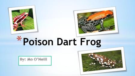 * Poison Dart Frog * Adaptations (Skin) Poisonous- keeps predators away from eating them. It could paralyze or even kill the predator. If you notice.
