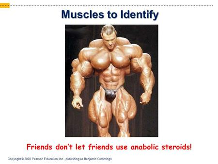 Copyright © 2008 Pearson Education, Inc., publishing as Benjamin Cummings Muscles to Identify Friends don't let friends use anabolic steroids!