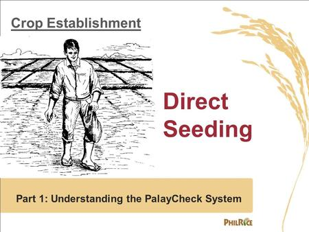 Crop Establishment Direct Seeding Part 1: Understanding the PalayCheck System.
