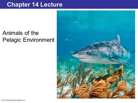 © 2014 Pearson Education, Inc. Chapter 14 Lecture Animals of the Pelagic Environment.