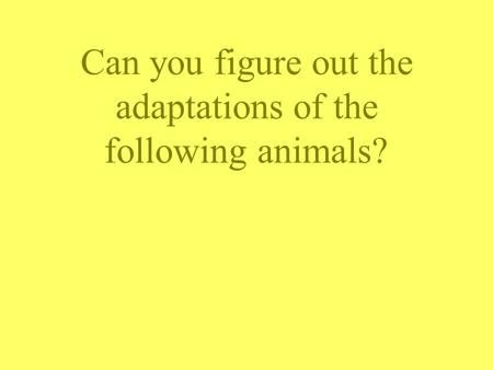 Can you figure out the adaptations of the following animals?