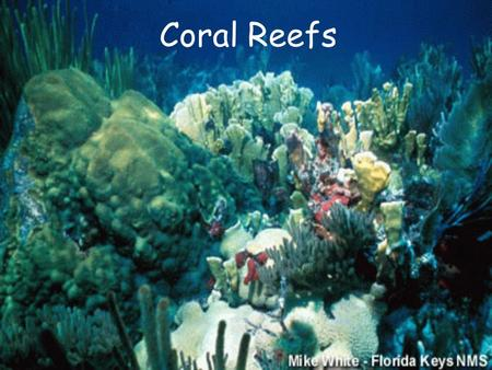 Coral Reefs. Georgia's Gray's Reef Gray's Reef is not a coral reef. It is not built by living hard corals as tropical reefs are. Instead it is a consolidation.