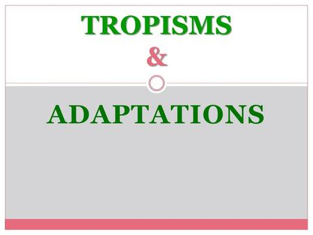 ADAPTATIONS TROPISMS &. A TROPISM IS A PLANT'S DIRECTED GROWTH TOWARDS OR AWAY FROM A STIMULUS. Tropisms.