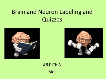 Brain and Neuron Labeling and Quizzes A&P Ch 8 Biel.