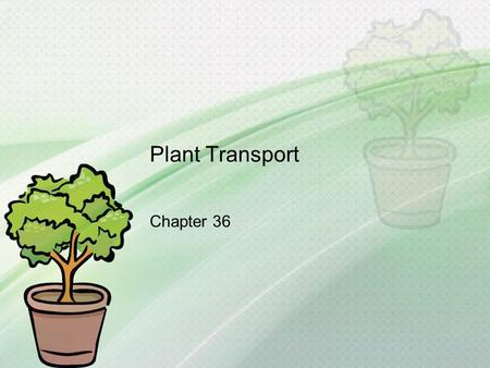 Plant Transport Chapter 36. What you need to know! The function of xylem and phloem tissue The specific functions of tracheids, vessels, sieve-tube elements,