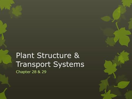 Plant Structure & Transport Systems Chapter 28 & 29.